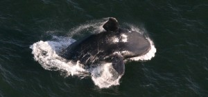 deep-learning-saves-whales_jp-720x340
