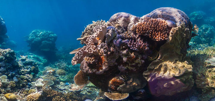 hdr-deep-learning-save-coral-reefs | NVIDIA
